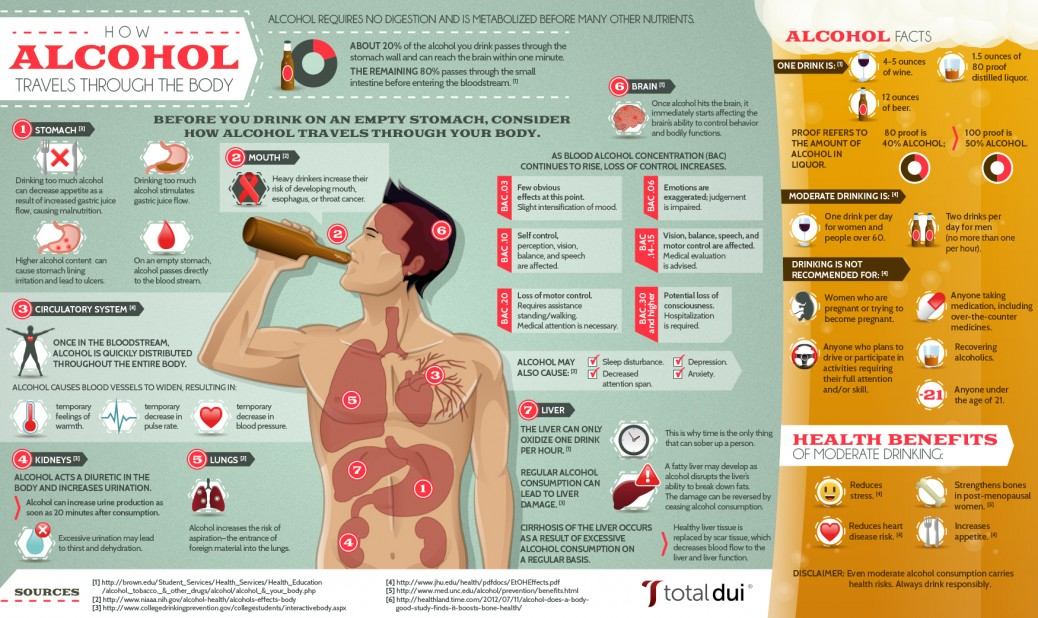 How Alcohol Travels Through the Body {Infographic} - Best ...