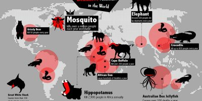 Deadliest Animals In the World {Infographic}