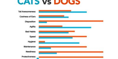 Cats vs. Dogs {Visual}