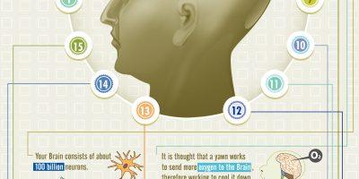 Brainology: Amazing Brain Facts {Infographic}