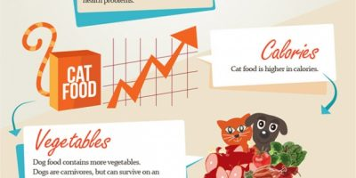 Dogs & Cat: Food Differences {Infographic}