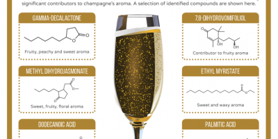 The Chemistry of Champagne {Infographic}