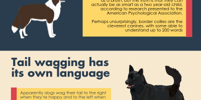 10 Things You Didn't Know About Dogs {Infographic}