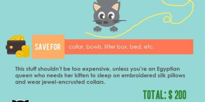 How to Raise a Kitten {Infographic}