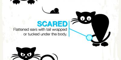 Cat Body Language Explained {Infographic}