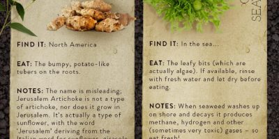What to Eat in the Wilderness {Infographic}