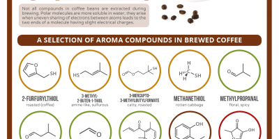 The Aroma of Coffee {Infographic}