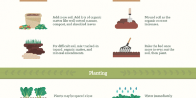 Vegetable Garden Tips {Infographic}