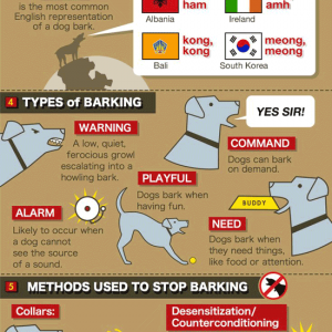 7 Facts About Dog Bark {Infographic}
