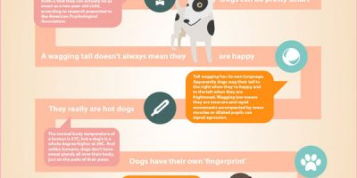 Funny Facts About Dogs {Infographic}