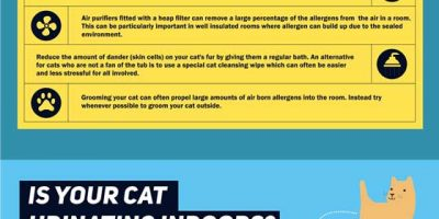 The Cat Owner's Cleaning Survival Guide {Infographic}