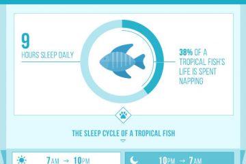 sleeping-habits