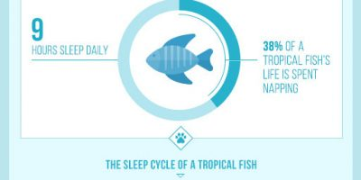 Sleeping Habits of Pets {Infographic}
