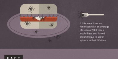 Facts & Myths About Spiders