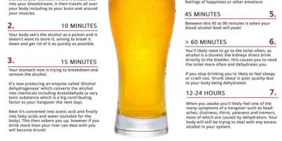 What Happens 24 Hours After Drinking a Beer {Infographic}