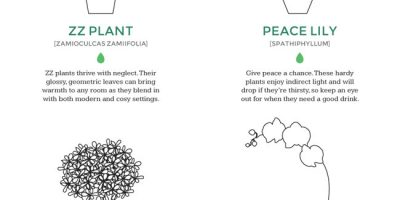 Which Indoor Plant Is Right For You? {Infographic}