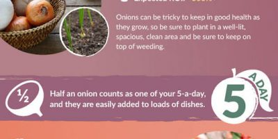 How to Save Money Growing Your Own Food {Infographic}
