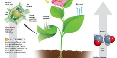 Photosynthesis Explained {Infographic}