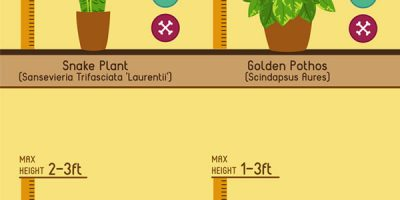 10 Great Indoor Plants {Infographic}