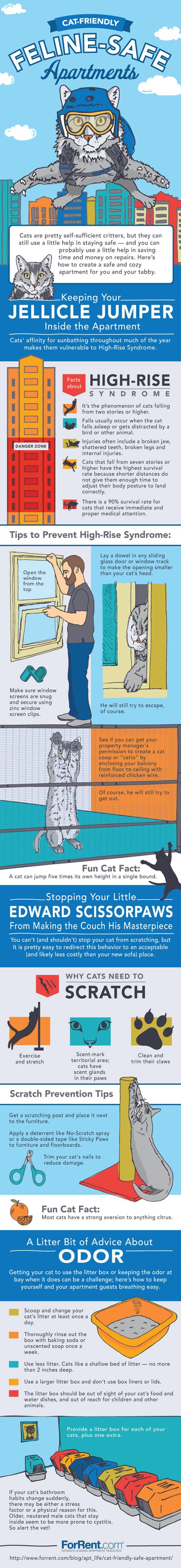 cat-friendly-apartment
