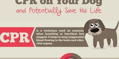 How to Perform CPR on Your Dog {Infographic}