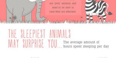 How Animals Sleep At Night {Infographic}