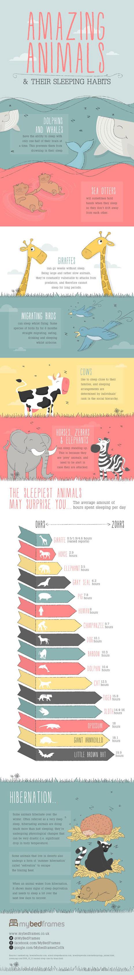 animals-sleep