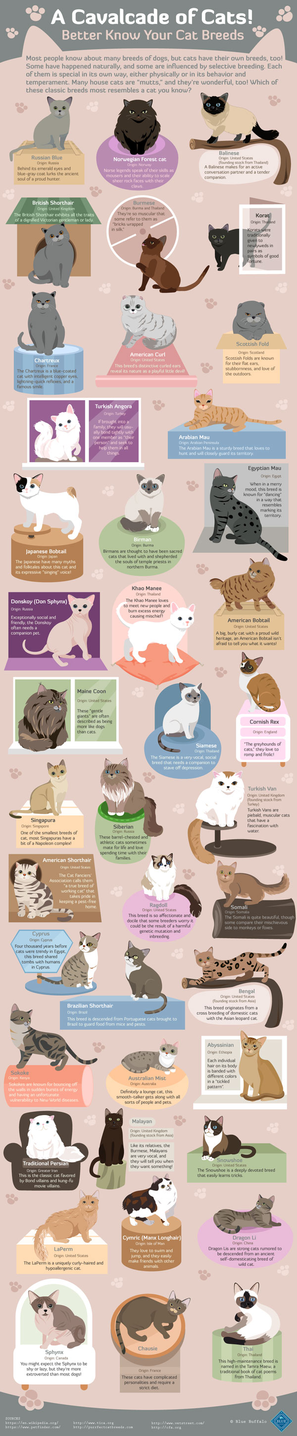 infographic-cavalcade-of-cats
