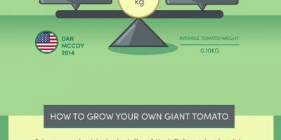 World's Biggest Vegetables & How To Grow Them {Infographic}