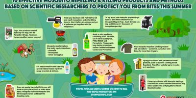 How to Get Rid of Mosquitoes {Infographic}