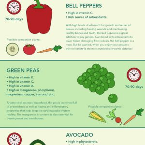 How to Grow Your Own Superfood {Infographic}
