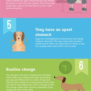 10 Reasons Why Your Dog Won't Eat {Infographic}