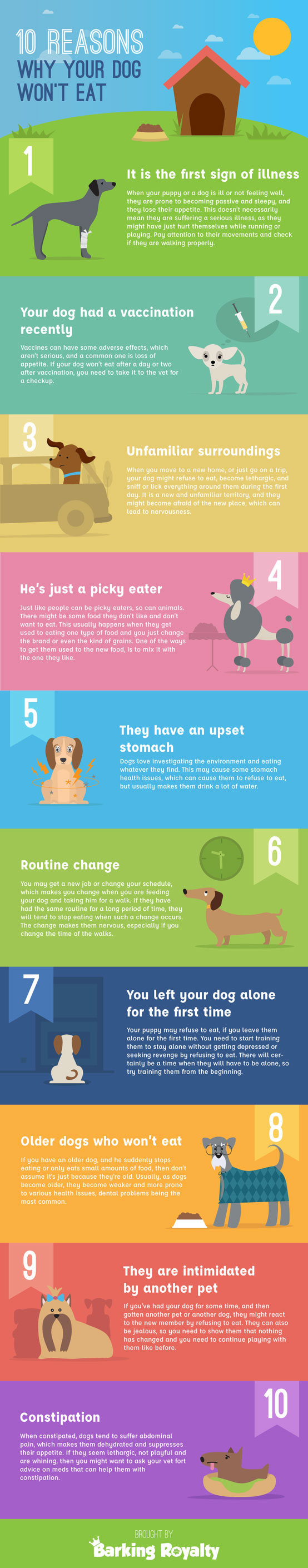 10 Reasons Why Your Dog Won T Eat Infographic Best