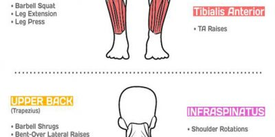 Best Exercises To Target Each Muscle Group {Infographic}