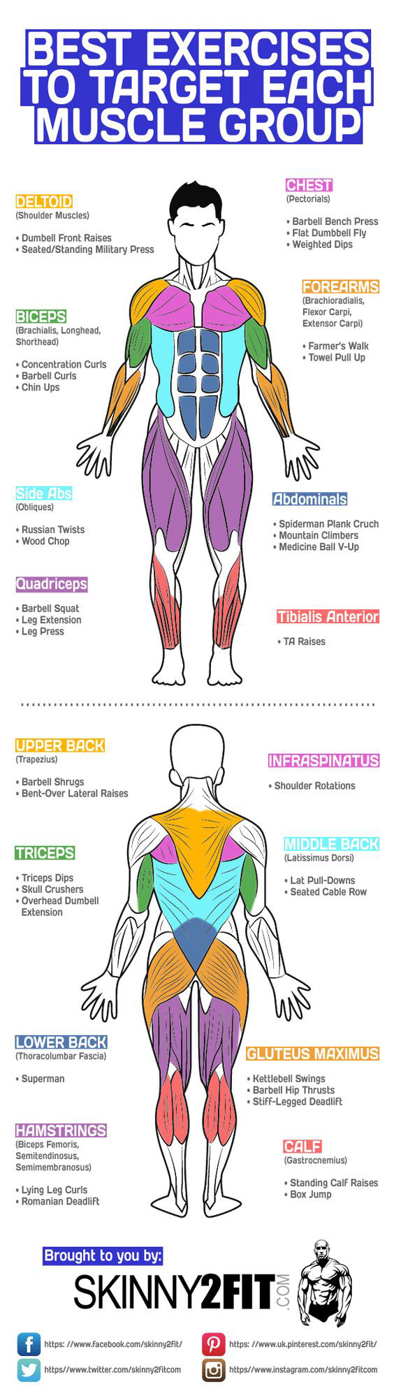 Best-Exercises-To-Target-Each-Muscle-Group