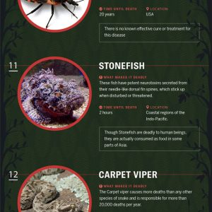 Deadly Creatures Around the World {Infographic}