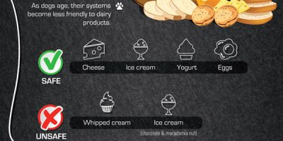 Ultimate Guide to Dog Food {Infographic}