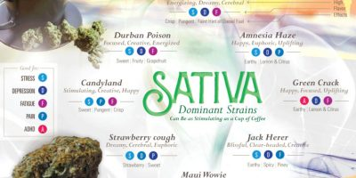 Guide To Marijuana Strains [Infographic]