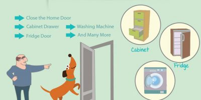 7 Household Chores That Can Be Done by Your Dog [Infographic]