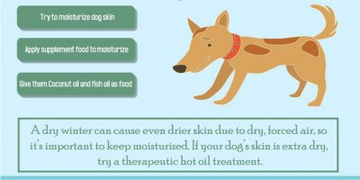 Dog Winter Care [Infographic]