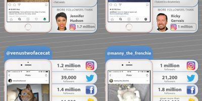 Pets That Rule Social Media [Infographic]