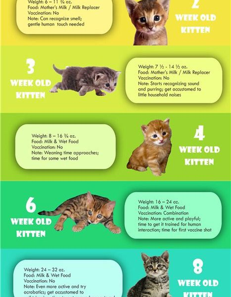 cat growth chart  infographic