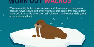 How Do Animals Sleep? {Infographic}