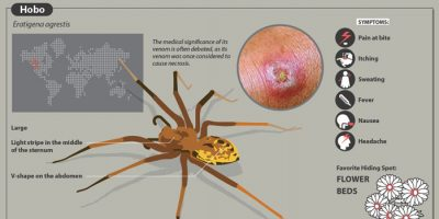 The Most Dangerous Spider Bites [Infographic]
