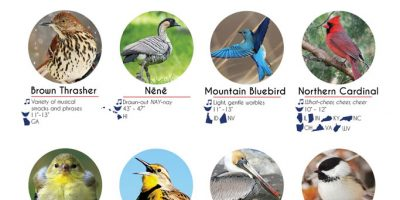 Birds of the United States [Infographic]