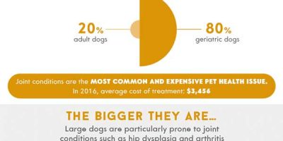 Is Your Dog In Pain? [Infographic]
