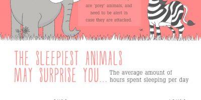 Sleeping Habits of Animals [Infographic]