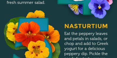 Top 10 Edible Flowers [Infographic]