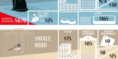 Cost of Owning a Pet [Infographic]