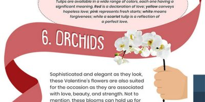 10 Flowers & Their Romantic Meanings